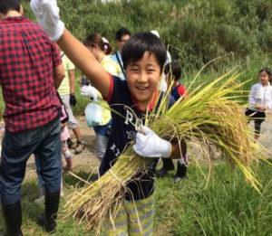 「稲刈り体験イベント」写真